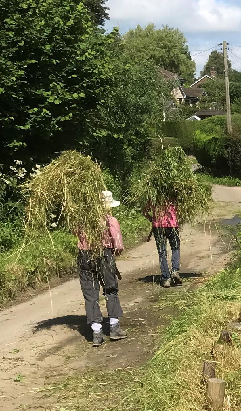 Invasive Plants Cleared At Hursey