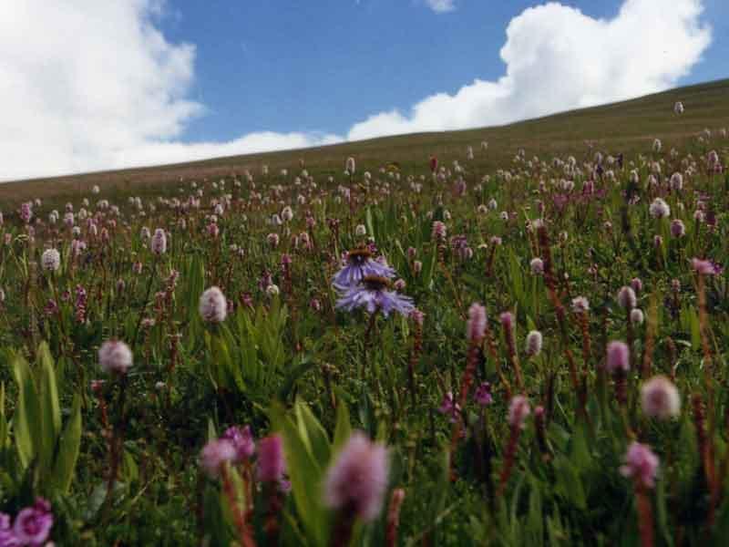 Larima-flowers