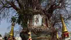 Pagoda entwined with banyan tree