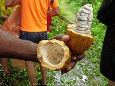 i semi del cacao all'interno del suo frutto
