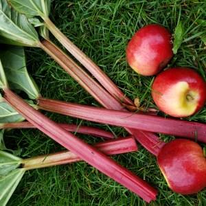 Rhubarbe et pommes
