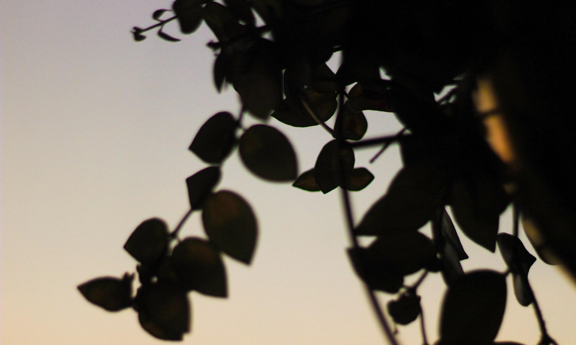 Aeschynanthus 'Mona Lisa' Broesse Tropisch Plantenkaffee