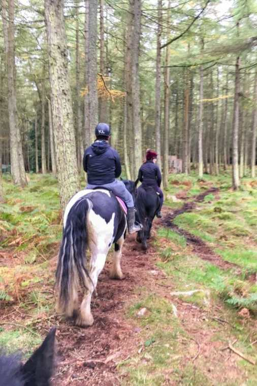 Adventure in Dublin Horse riding through the woods Ireland