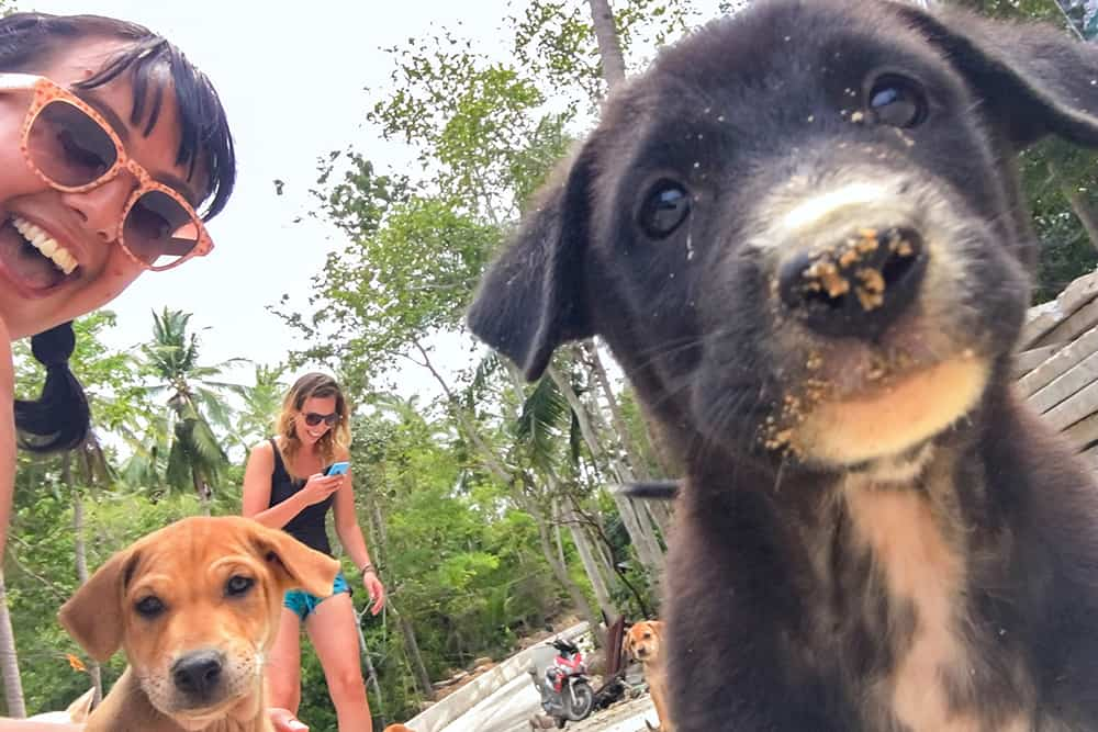Street puppies in Koh Tao Thailand