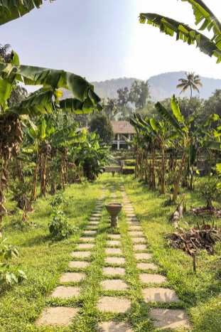 Path going through banana plantation at Windermere River House in Neriamangalam, Kerala - #kerala #india