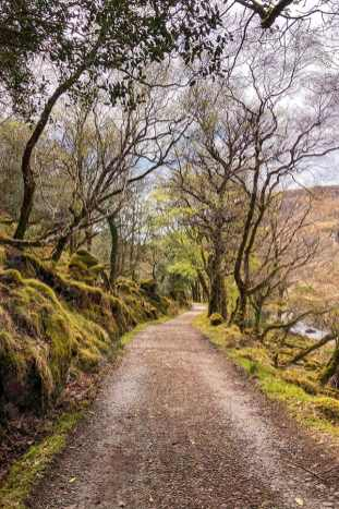 Bridleway going trough woods with mossy rocks at Glenveagh National Park
