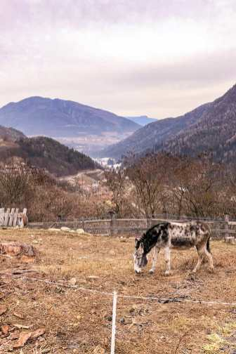 Donkey eating grass in a field with valley in the background