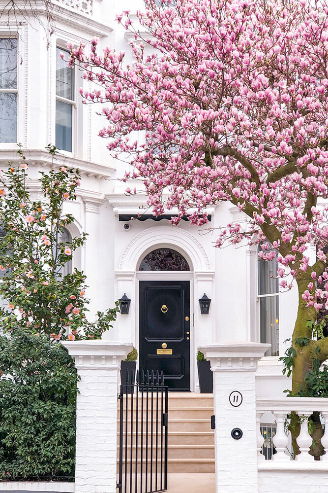 White house steps leading to a black door surrounded by a pink flowering camellia and a pink flowering magnolia