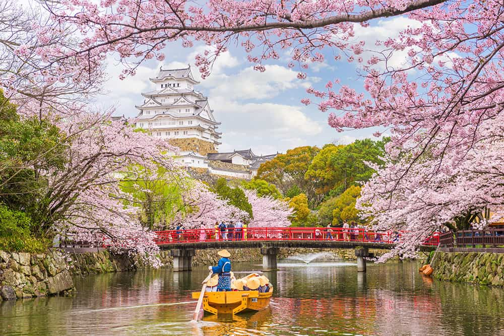 Japanese castle in the distance framed by cherry blossom branches. Boat with people on the river and red bridge.
