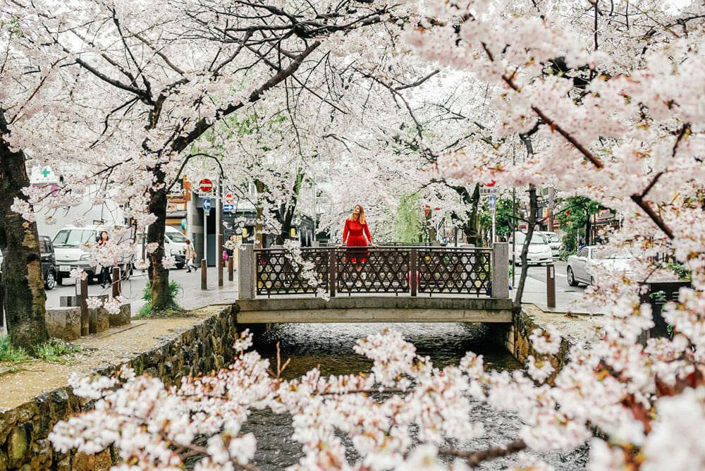 Lady in red dress standing on a small bridge surrounded by cherry blossom