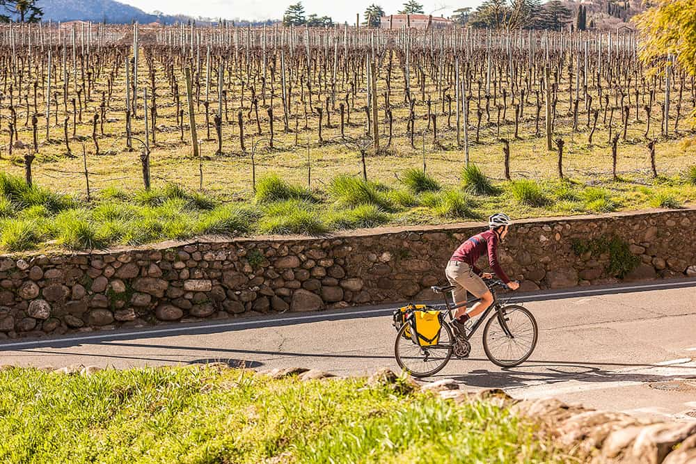 Man cycling along a road with vineyards in the background