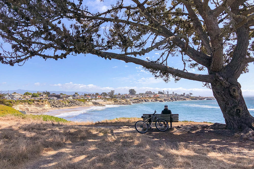 Man sitting on a bench under a tree overlooking the bay and the coastline