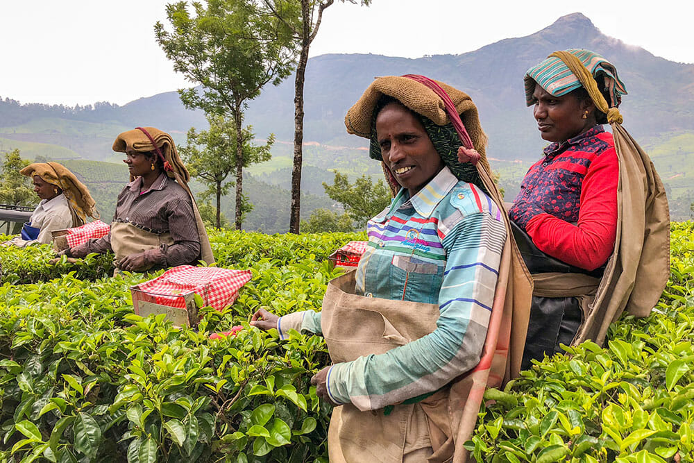Four women working in the tea plantations with tea collection bags hanging from their heads. There are mountains in the background