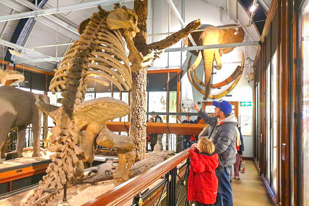 Man and child looking at a dinosaur skeleton in Tring Natural History Museum