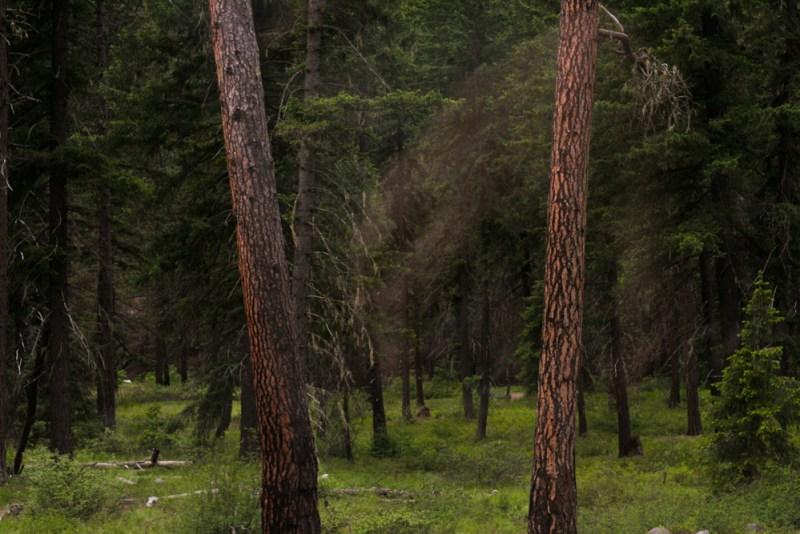 Highway 2 Forest in Washington