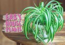Dedicated: Easy Plants to Grow at Home
