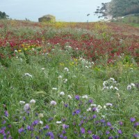 The wildflowers of the Sicilian Spring