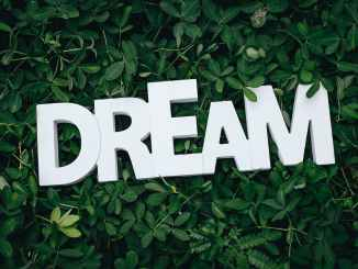 Image of letters spelling 'DREAM' on leaves.