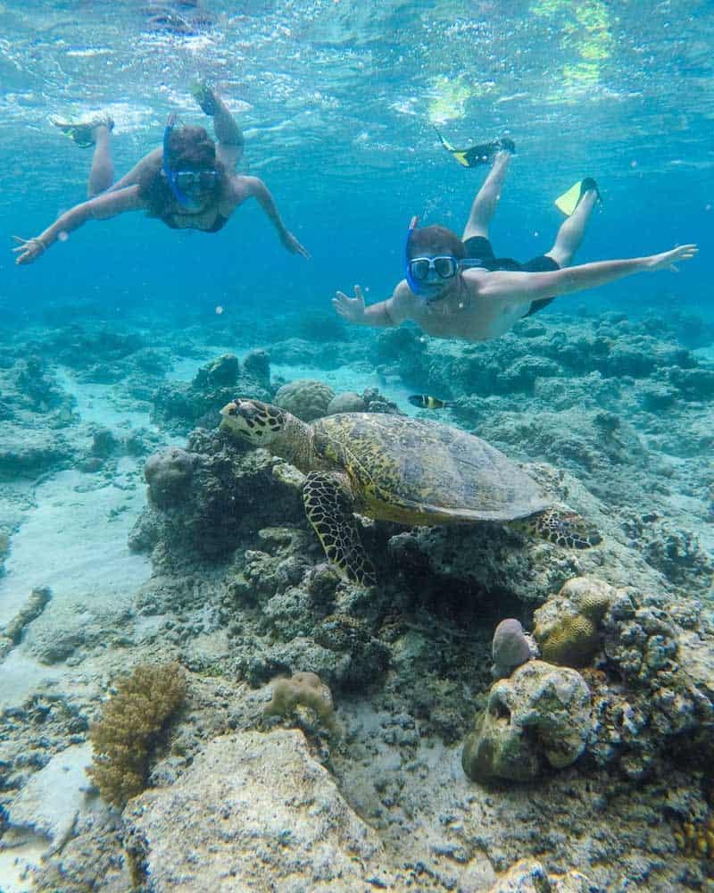 gili air turtles, gili islands swimming with turtles, bali indonesia turtles, swimming with turtles in bali, gili t swimming turtles,
