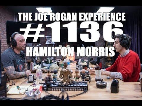 Joe Rogan Experience #1136 – Hamilton Morris – BrokenShins com