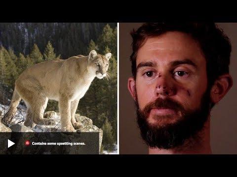 Runner Chokes Mountain Lion to Death (Gracie Breakdown)