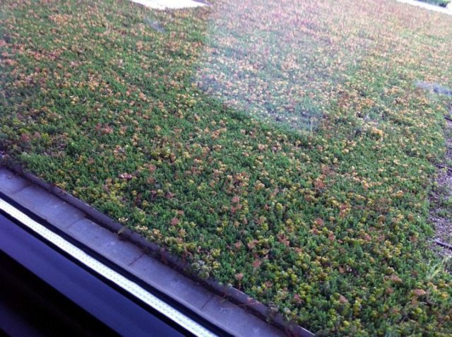 A detail of the new green roof. (Courtesy Mayor Fischer)