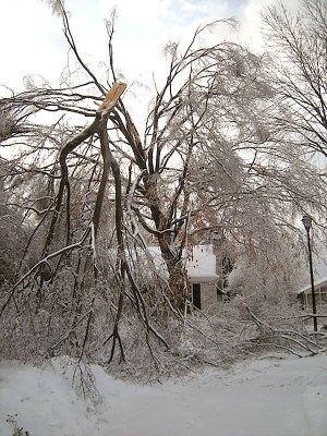2009 ice storm on my Louisville street. (Courtesy Allen Bush)