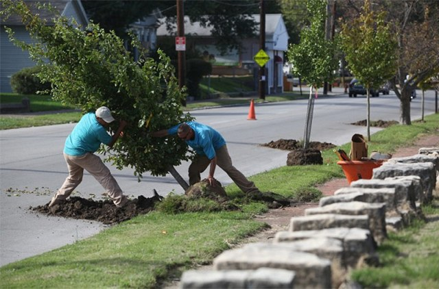Planting trees in the Portland neighborhood. (Mike Hayman)