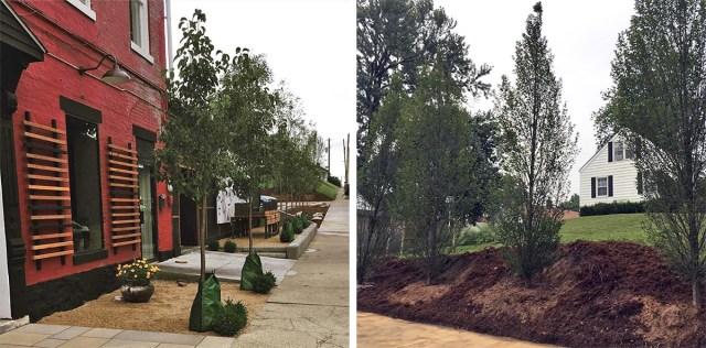 New trees at Eiderdown. (Courtesy Patrick Henry)
