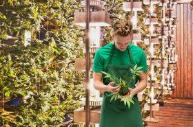 Smiling florist standing in marijuana plant
