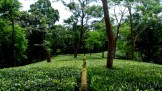 Tea gardens are popular here. Its very refreshing as well.