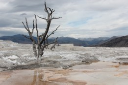 Mammoth Hot Springs, Yellowstone, MT (unedited)