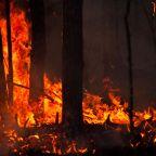 Scef – Elden och Rig