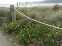 2013-05-10 Paraparaumu Beach (8)