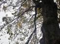 2012-04-28 Thorndon (11)