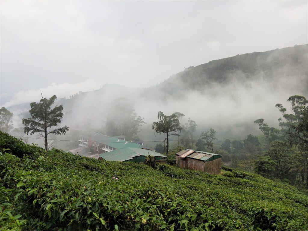 金馬倫高原 - Teh Boh 茶園