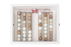 Incubator for eggs Br-Box 50
