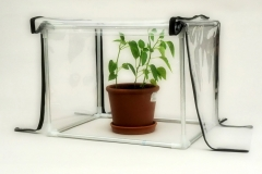 Mini greenhouse for the apartment