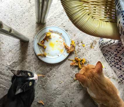 Sharing my meal with some new friends