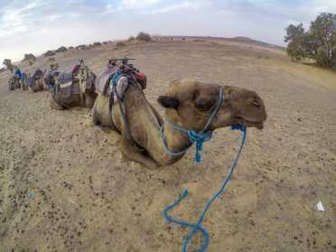 My camel friend