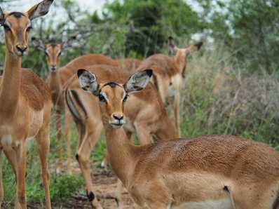 Impala everywhere