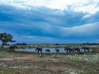 Elephants parading past