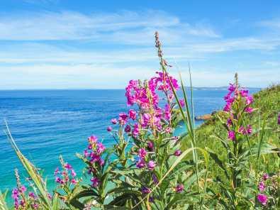 Irish wildflowers