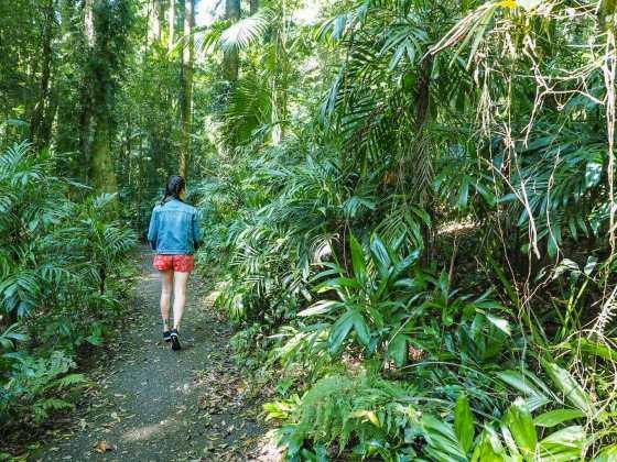 Enjoying the Wonga Walk through the Dorrigo Rainforest