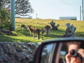 Driving away from Emerald Beach