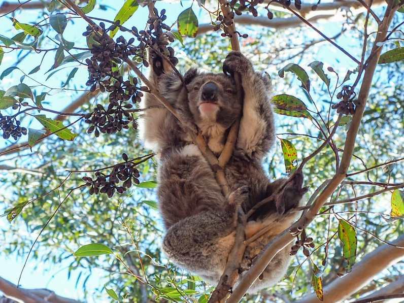 Hanson Bay Wildlife Sanctuary
