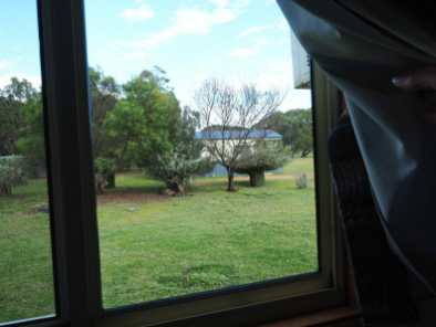 Looking out our window at the roos