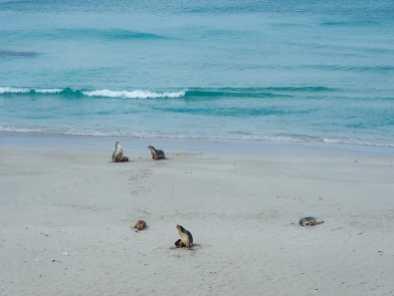 Aptly-named Seal Bay