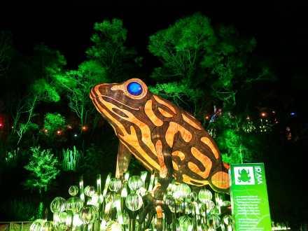 A giant Southern Corroboree Frog