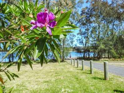 Beautiful flora in Booti Booti National Park